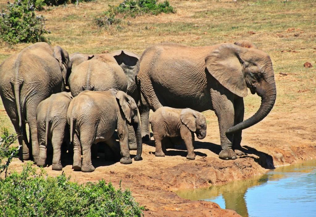 elephant-1092508_1280