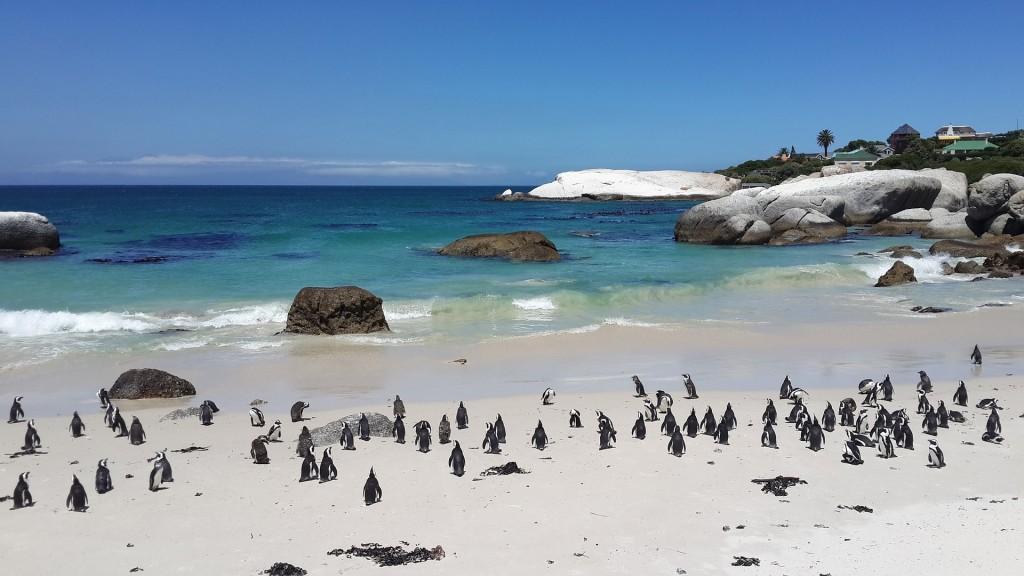 penguins-857208_1920