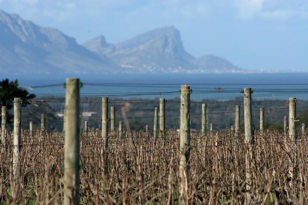 vineyards-227780_1280